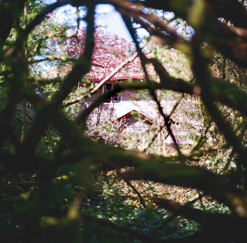 IM_HHS_trottier_forest-01