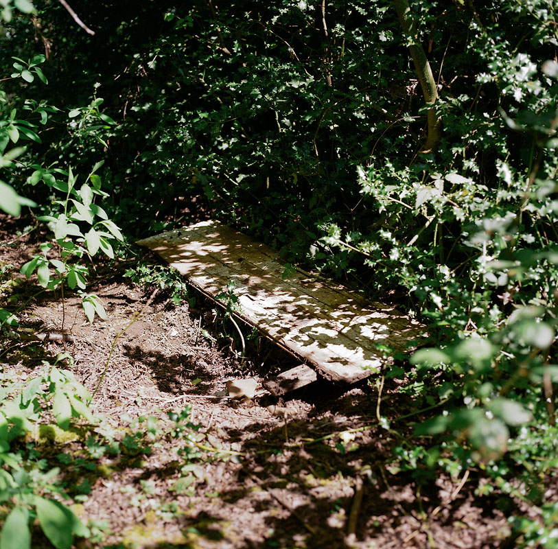 IM_HHS_trottier_forest-04