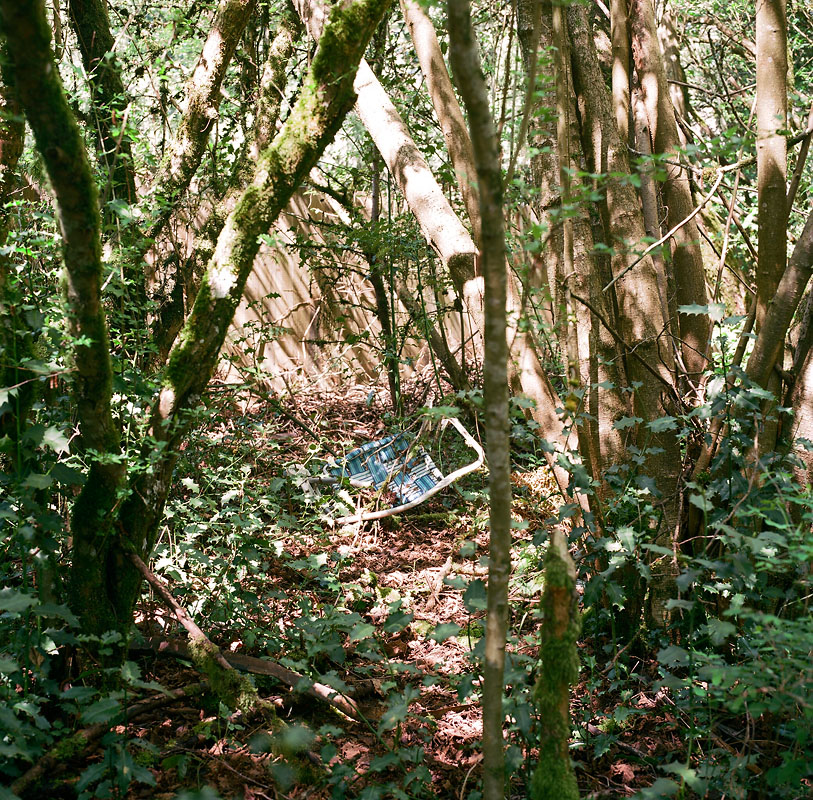 IM_HHS_trottier_forest-07