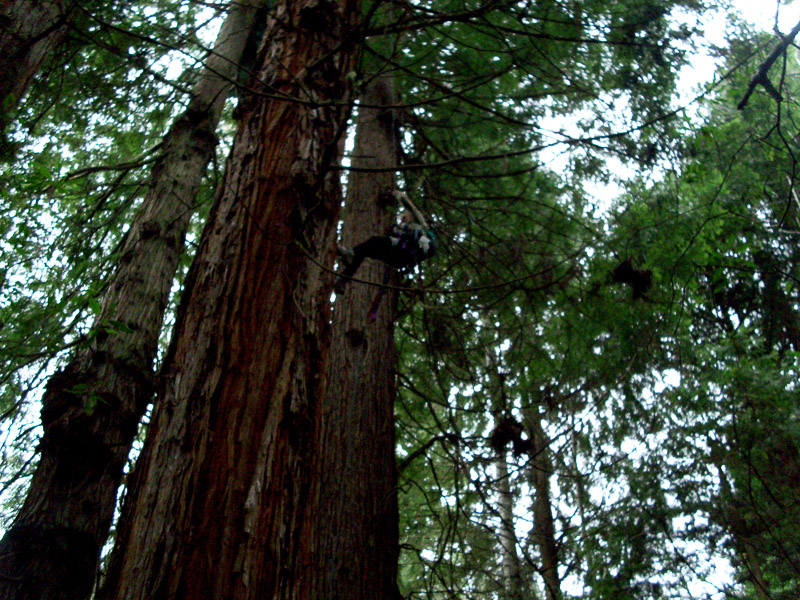 """Their current plan is to clear-cut all trees that they own over 50 years old,"" says ""Snuffles,"" an anonymous Humboldt Earth First! sitter. ""Jello,"" a Cascadia Earth First! activist who sometimes sits in Humboldt, ascends into the canopy."