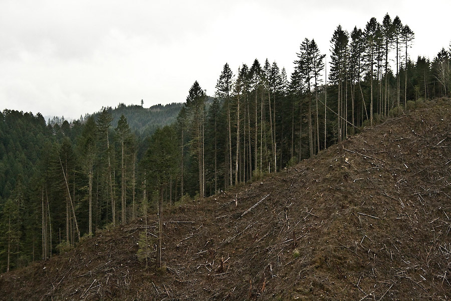 """I think a lot of them are just misinformed,"" says Brant (full name withheld), who runs a trucking company that hauls woodchips for Roseburg Forest Products. ""The idea that we're running out of trees—they're like potatoes; you can plant more."""