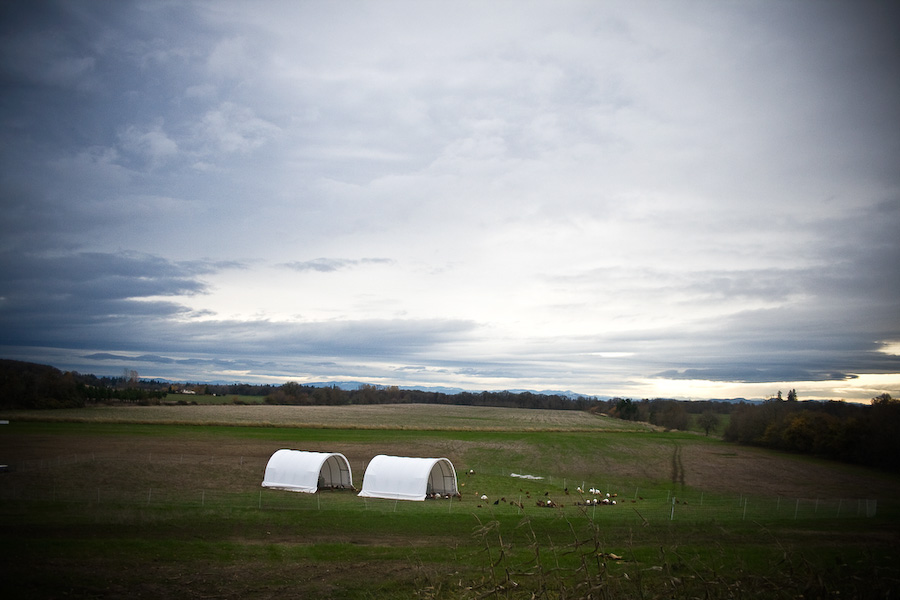 The hooped shelters for the laying hens and turkeys at Afton Field Farm. These structures are easily movable and travel around the Jones' property which stretches to the line of trees in the distance. Continual movement ensures fresh grass for the animals and even fertilizing for the grass.