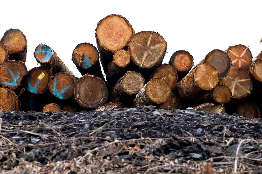 IM_UO_schefstrom_wood-10