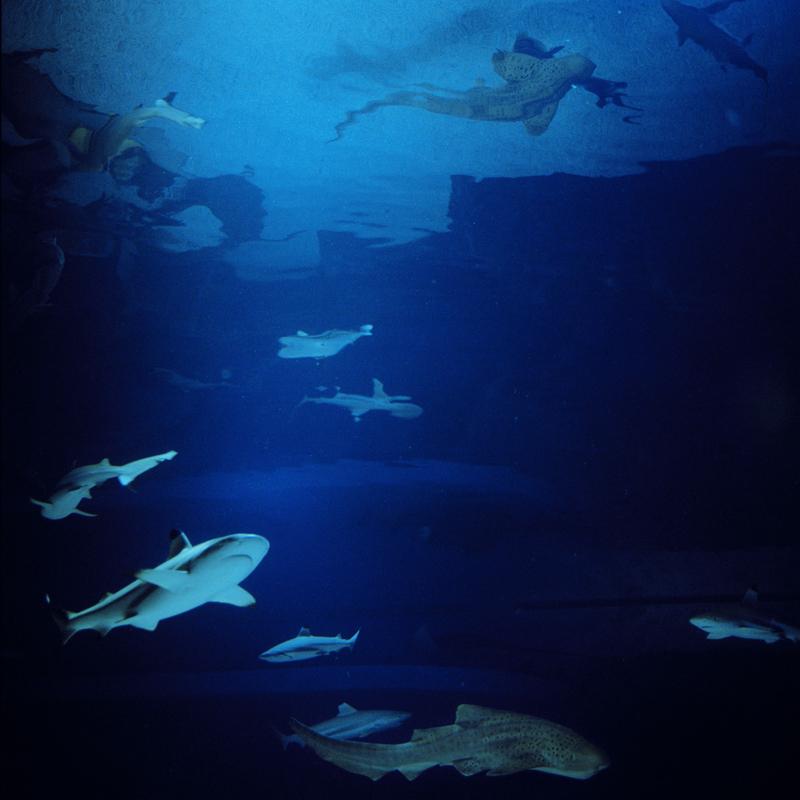 Carcharhinus  Melanopterus, Stegostoma Fasciatum Beijing Aquarium