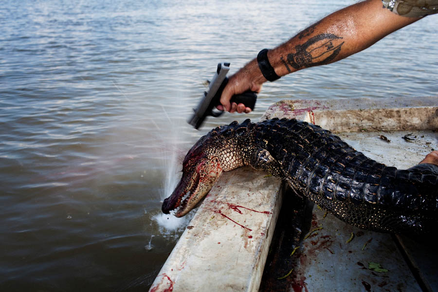 Rebel plants a second bullet in the head of a gator that kept moving after being hauled into the boat. Each gator is then tagged before being piled in the bottom of the boat.